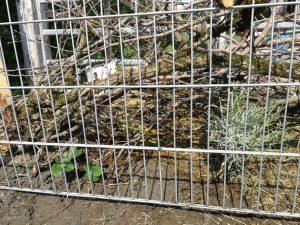 Kräuter in einer Totholzhecke: Nachhaltigkeit im Reitsport