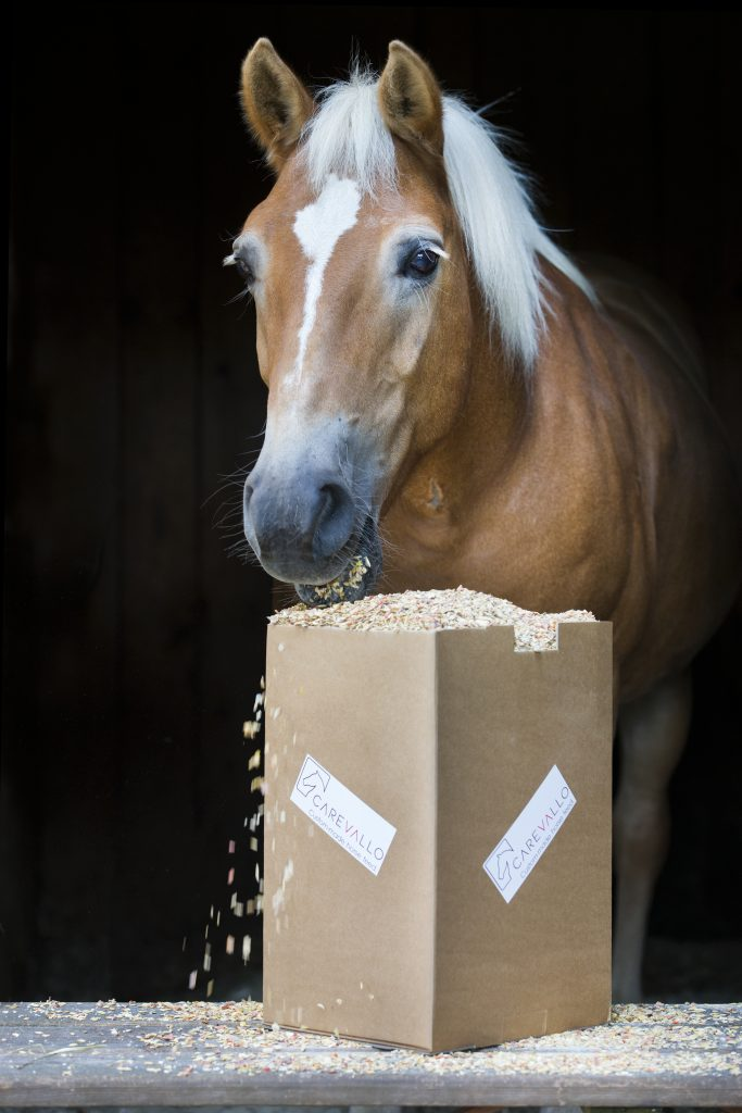 Pferde gesund füttern: Natürliche Pferdeleckerlis