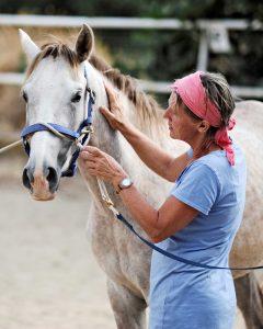 Achtsamkeit in der Ausbildung von jungen Pferden