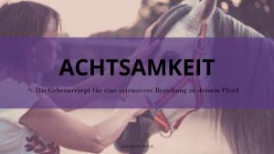Achtsamkeit für besser Pferd-Mensch-Beziehung