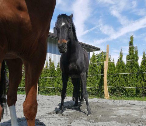 Pferde richtig putzen: 6 Übungen für achtsames Putzen