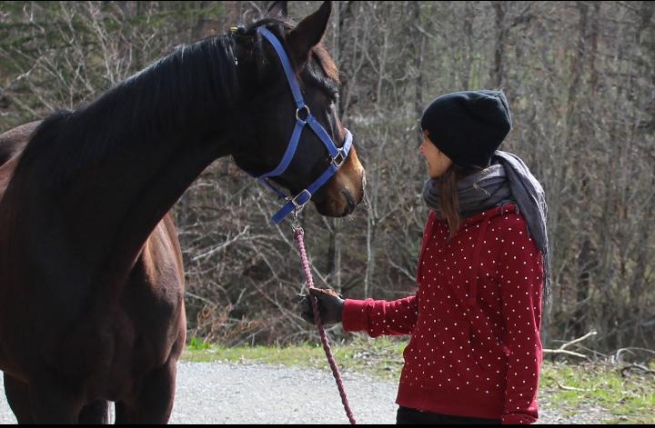 Zufriedene Pferd-Reiter-Paare durch Online-Training