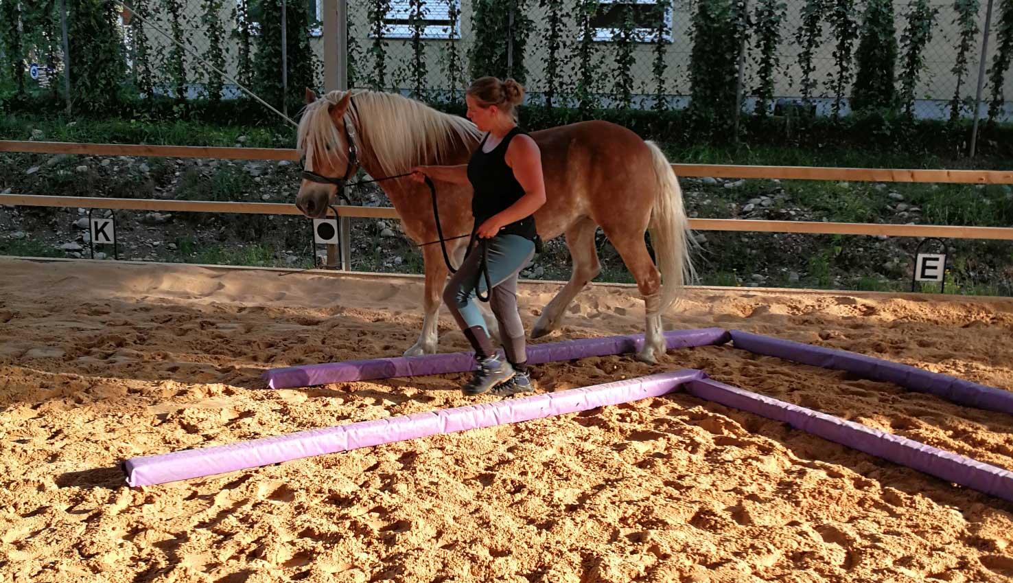 Innigere Beziehung durch Pferdetraining online: Vera und Ronja