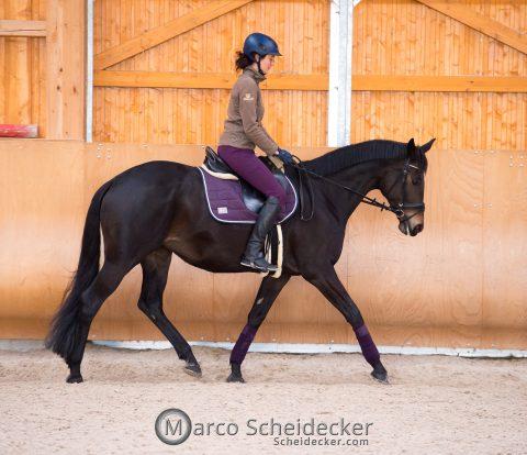 Besser reiten: Warum es so wichtig ist, der beste Reiter für sein Pferd zu werden