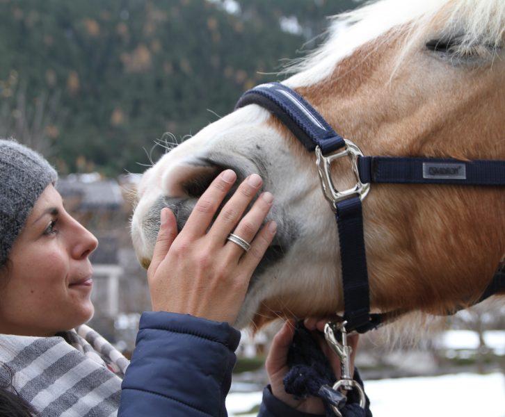 Pferde lieben Tellington TTouch