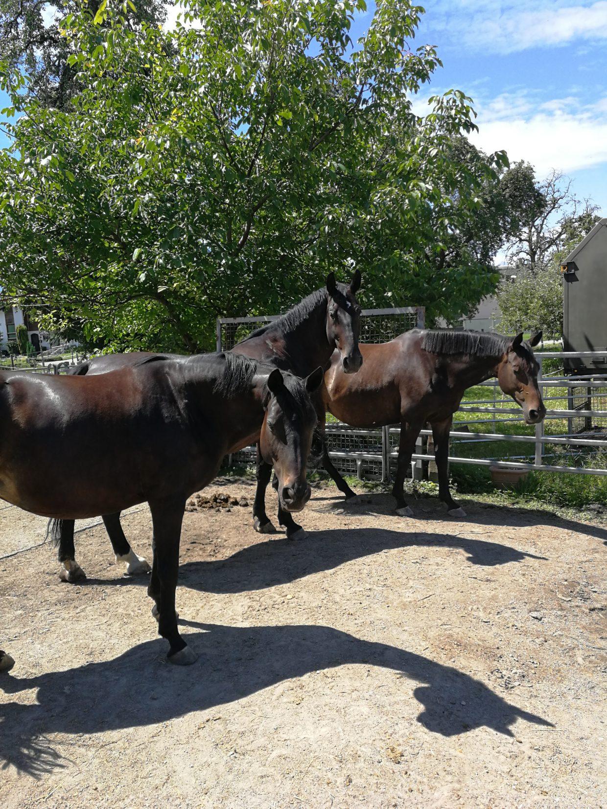 Pferd Eingewöhnung Stallwechsel