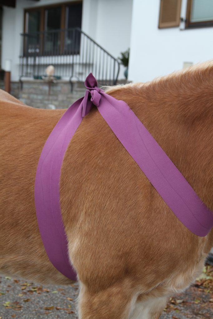 Körperbandagen für Pferde anwenden