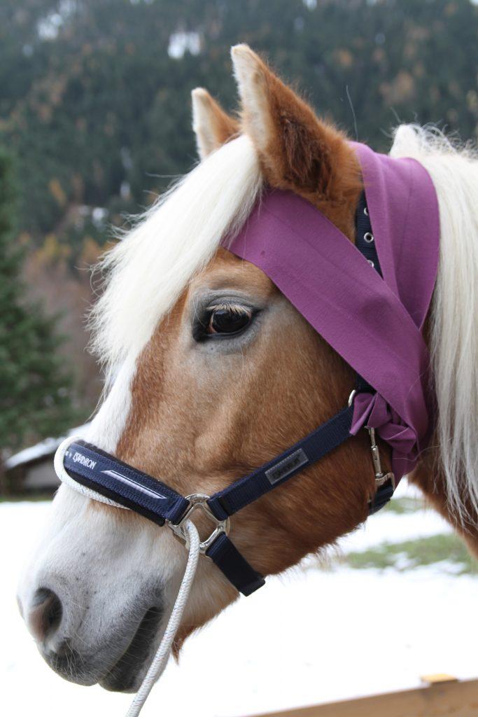 Kopfbandage am Pferd