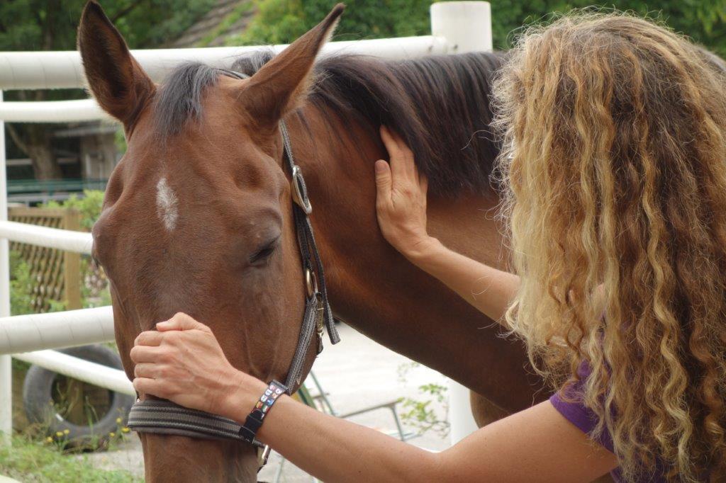 Biomechanik Pferd