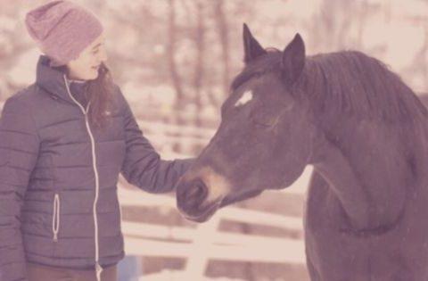 Weiblichkeit Pferdetraining